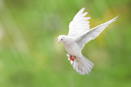 Contact Info For Blessed Memories Dove Release, (443) 794-2860.